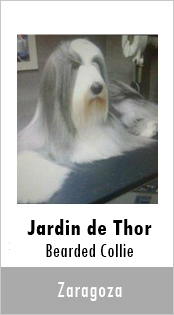 Jardin de Thor Bearded