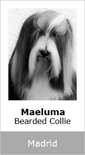 Maeluma