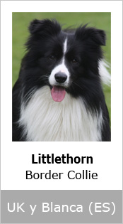 Littlethorn