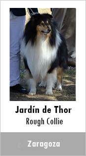 Jardin de Thor Rough