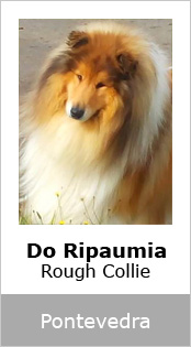 Do Ripaumia Rough Collie