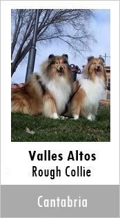 Valles Altos