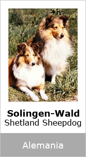 Solingen-Wald Sheltys