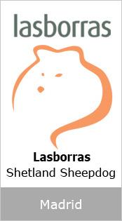 Lasborras Shetland Sheepdog